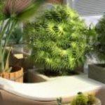 visualiser veranda zen